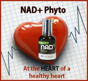 NAD+ PHYTO AT THE HEART OF A HEALTHY HEART